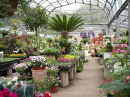Green Meadow Nursery