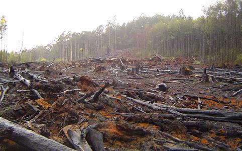 Causas Dela Perdida Dela Biodiversidad En Mexico Wikipedia