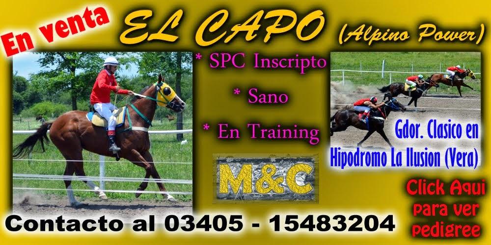 EL CAPO - 01/01/15