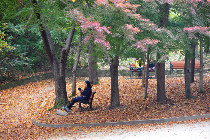 Woman reading a book under the trees