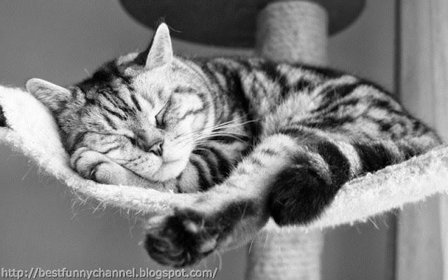 Sweet sleeping cat.