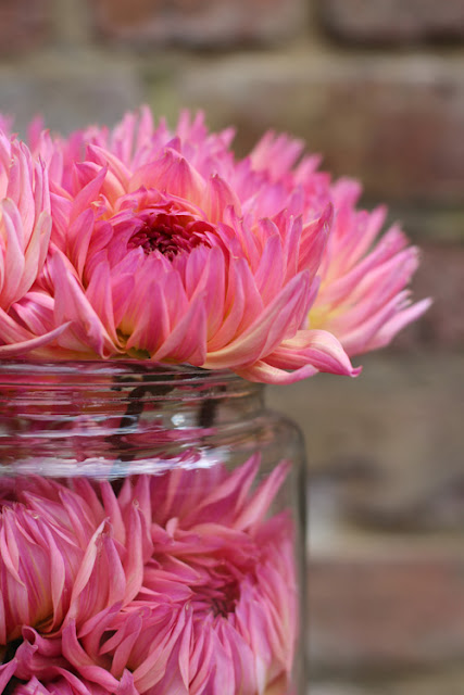Pink and yellow Dahlias in a vintage pickling jar