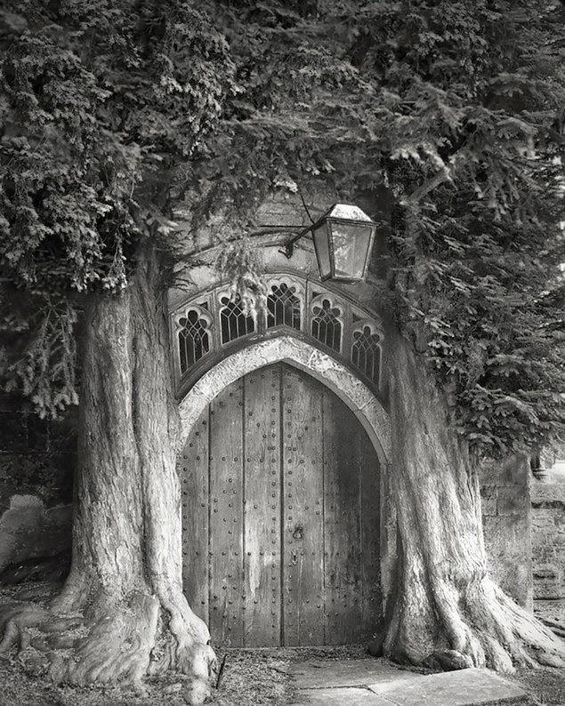 beth moon oldest living trees-8