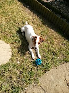 dog playing in garden
