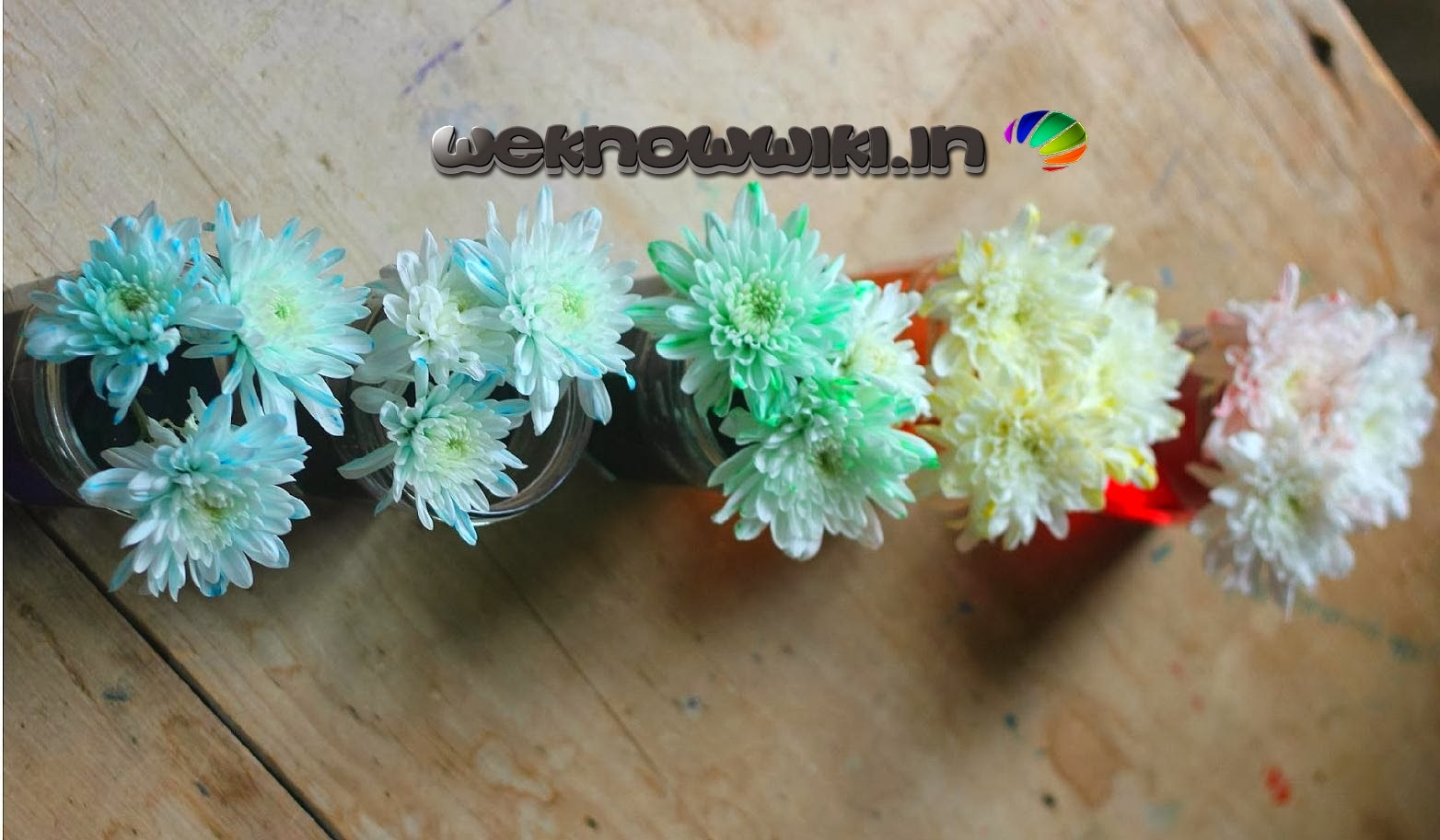 multi colour beautiful flower colour changing expirement | weknowwiki.in