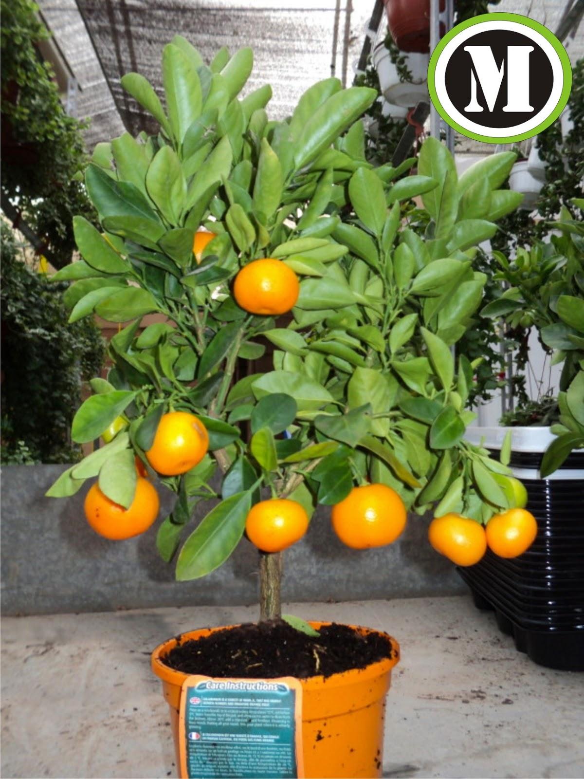 Newen mo for Viveros de arboles frutales en concepcion