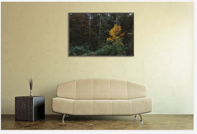 Print picture,sale photograph,Art photo,foto print
