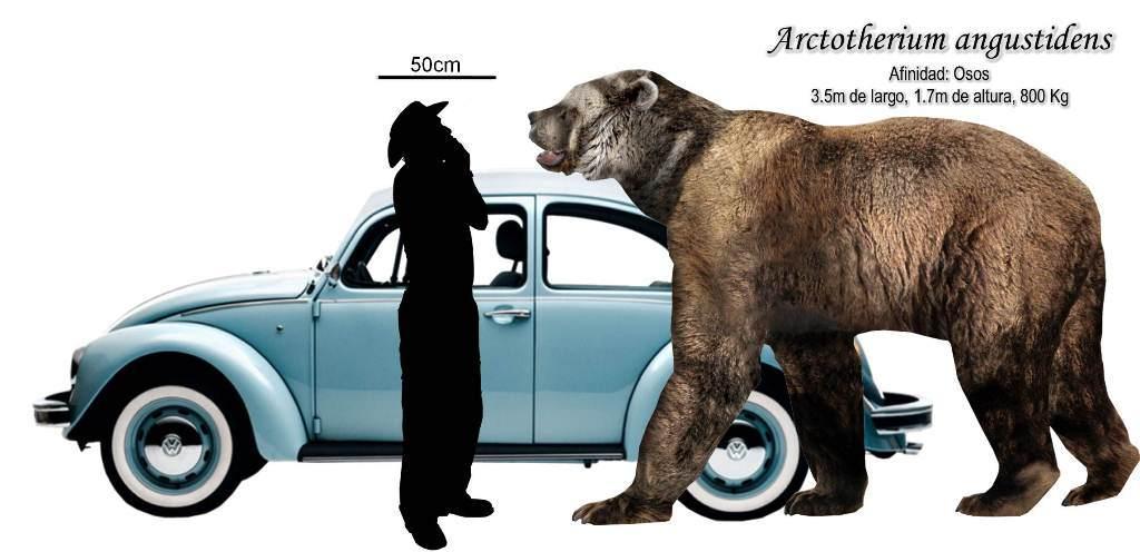 Conoce más sobre los animales herbívoros Escolar  - fotos de animales herbívoros