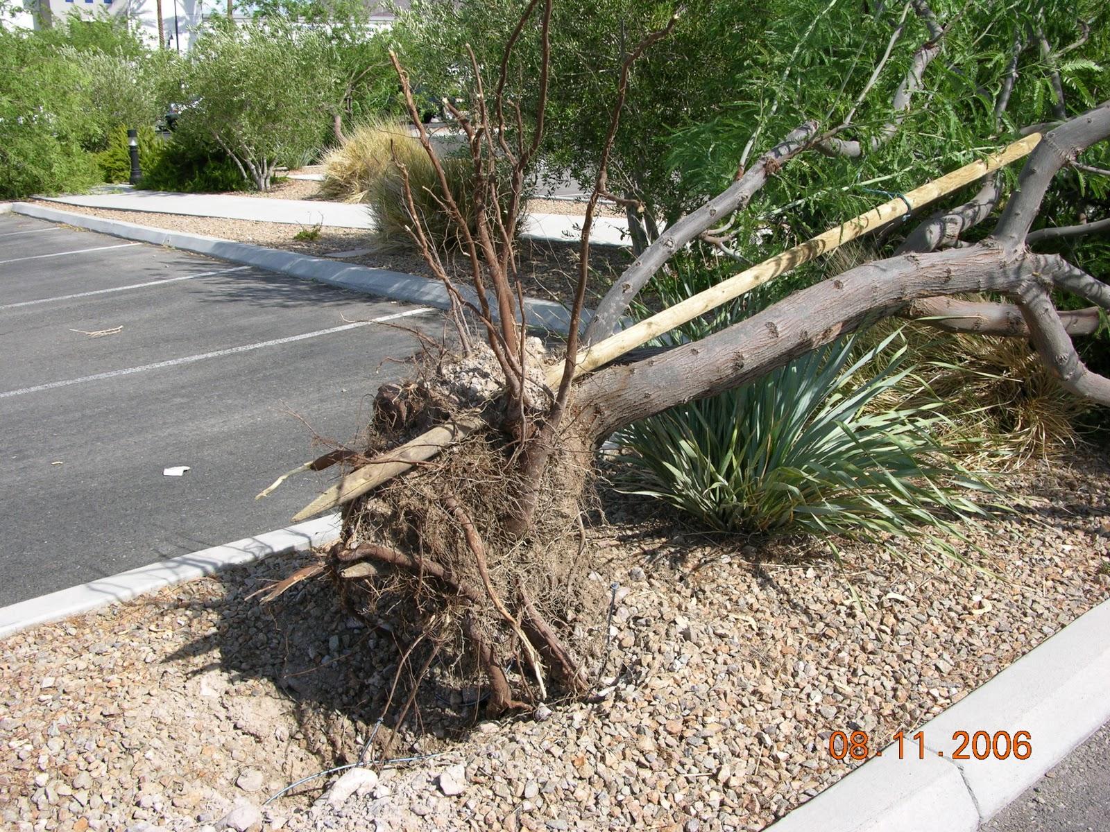 John39s Las Vegas Landscape Tips Mesquite A Las Vegas Landscape