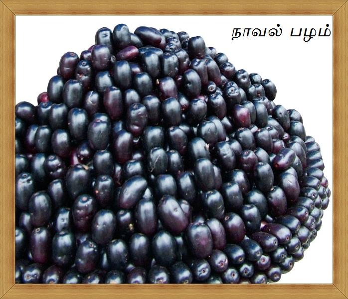 பழங்கள் பல விதம் ஒவ்வொன்றும் ஒரு விதம்.. - Page 2 Jamun+Fruit