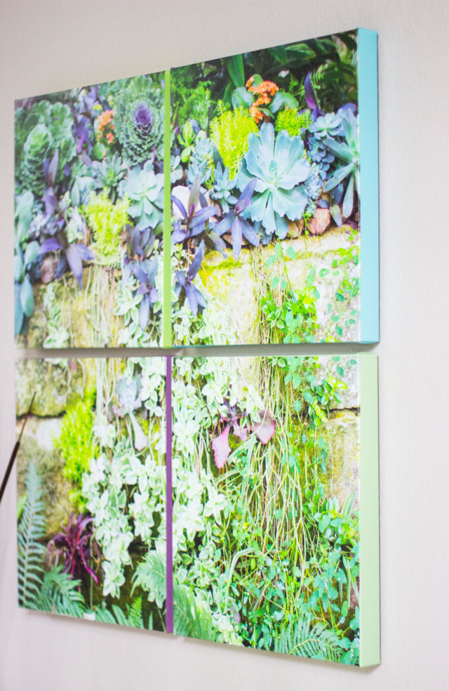 How to turn a photo of succulents into cool DIY canvas art!