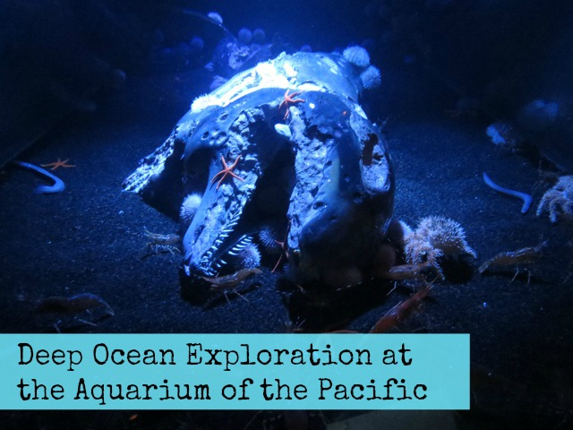 Deep Ocean Exploration at the Aquarium of the Pacific