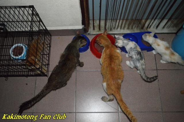 Dari Kanan Dua Ekor Kucing Dbkl Jamek Dan Raizo