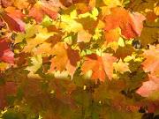 Beautiful fall foliage along the river!