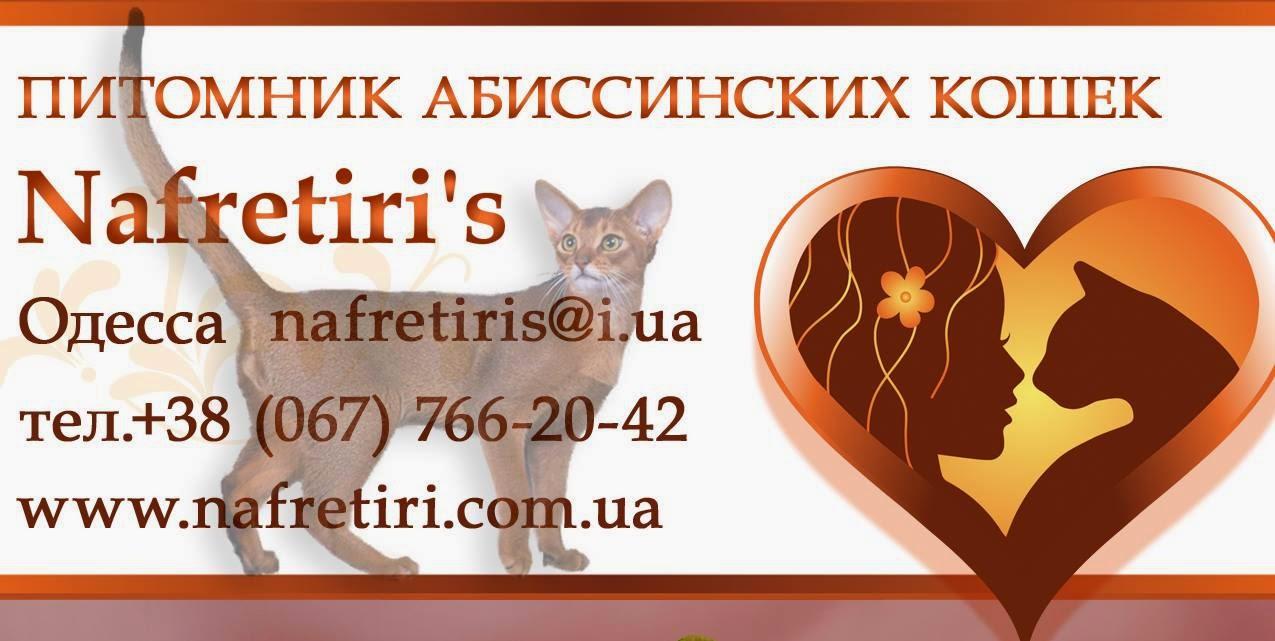 Nafretiri's - питомник абиссинских кошек