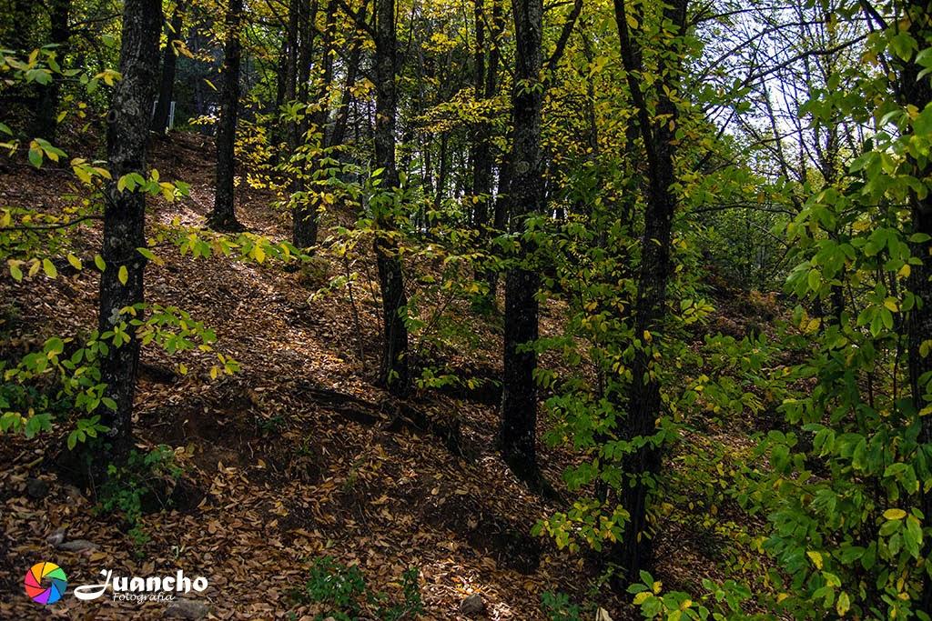 Bosques por el Juanar