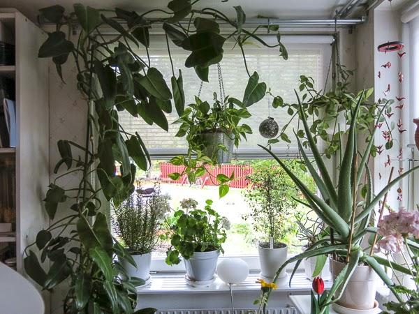 blommor, köksfönster
