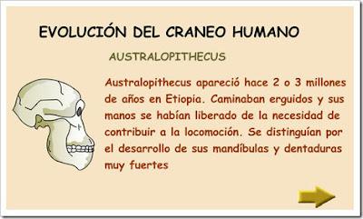 http://www.juntadeandalucia.es/averroes/html/adjuntos/2007/09/13/0030/prehistoria/evolucion/evolucion.swf