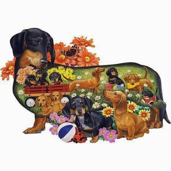teckel-dachshund-doxie-1