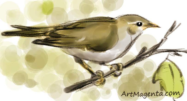 Arctic Warblersketch painting. Bird art drawing by illustrator Artmagenta.