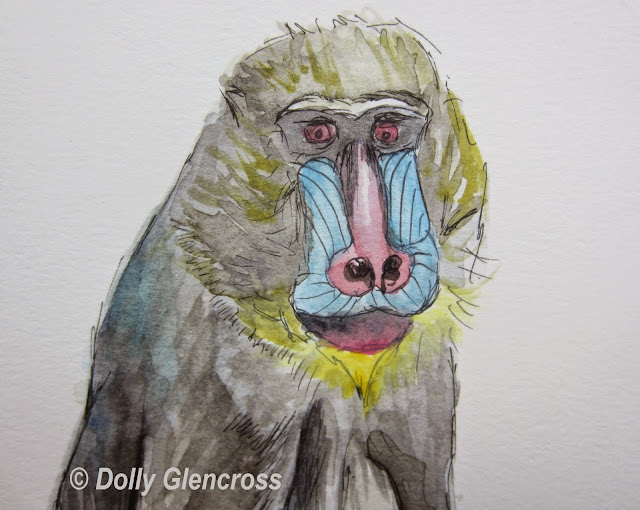 Baboon watercolour close up By Dolly Glencross