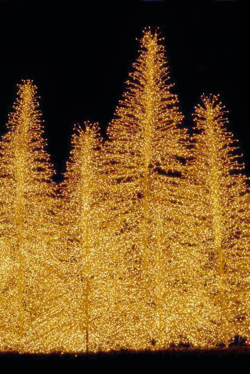 Christmas trees gold lights