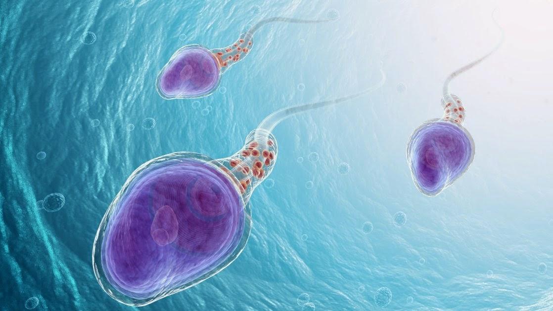 Reproduccion en biologia