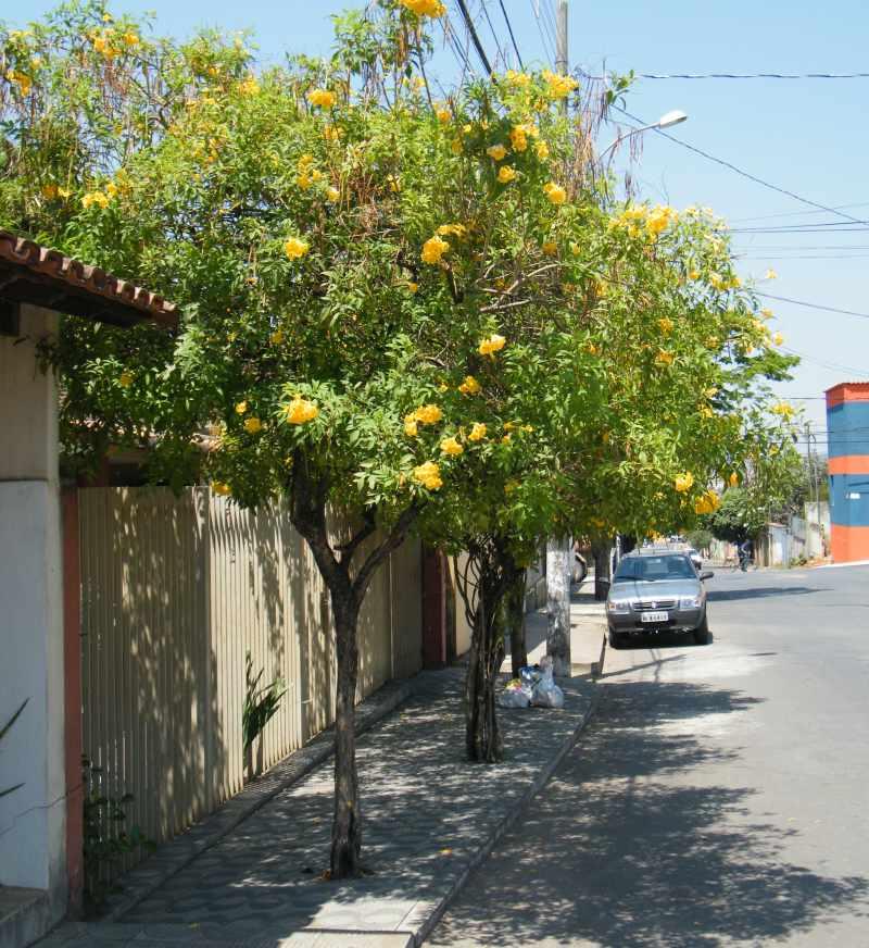 Blog do Ramon Lamar: Que tal plantarmos mais arbustos?