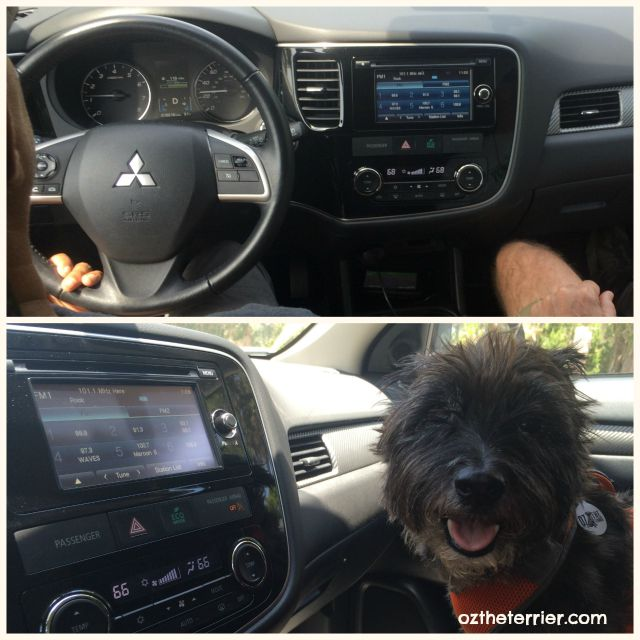 Oz the Terrier in front seat of Mitsubishi Outlander SE #DriveMitsubishi