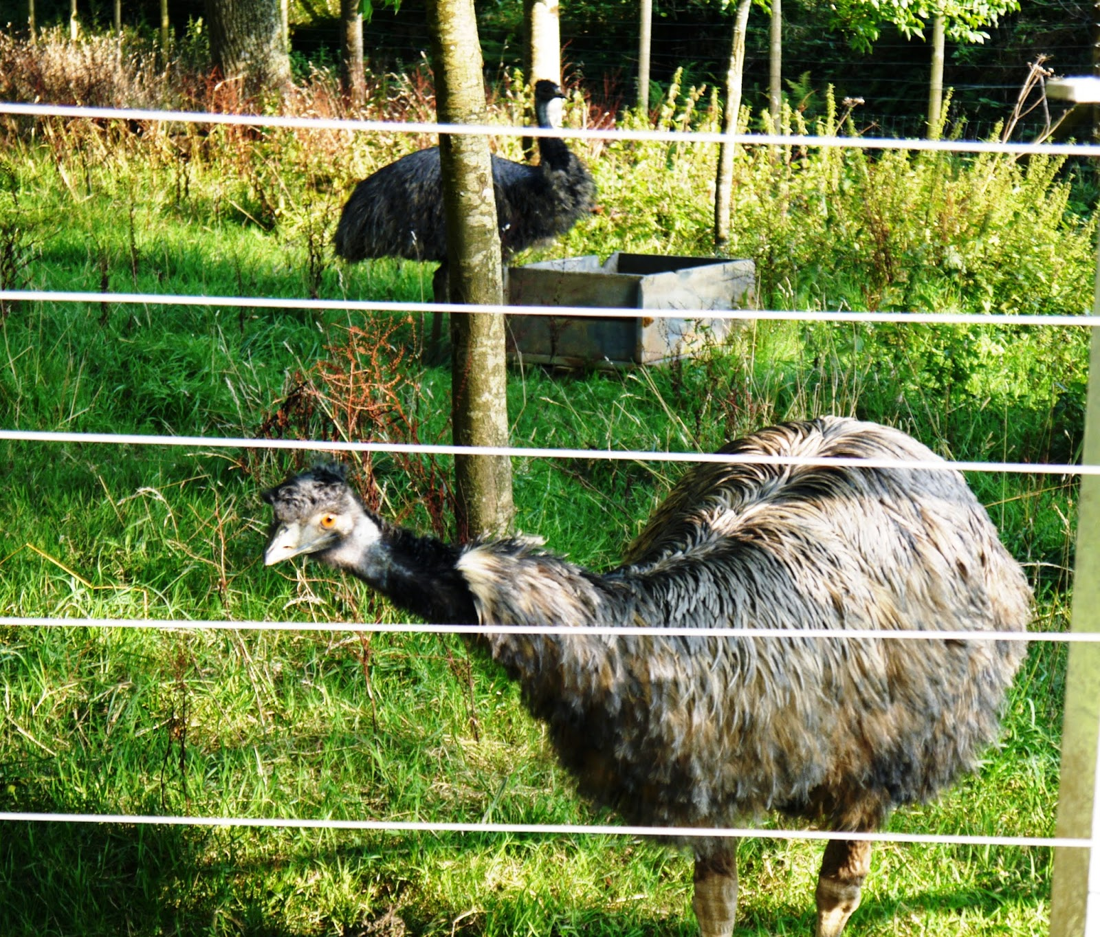 The Lost Gardens of Heligan, Cornwall - emus Queenie and Edmund