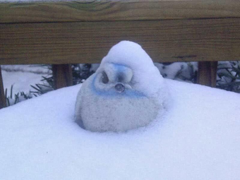Alien Snowbird