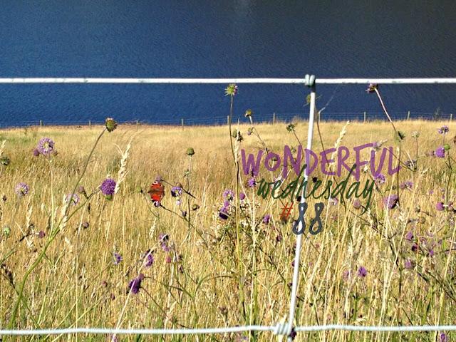 Wonderful Wednesday #88