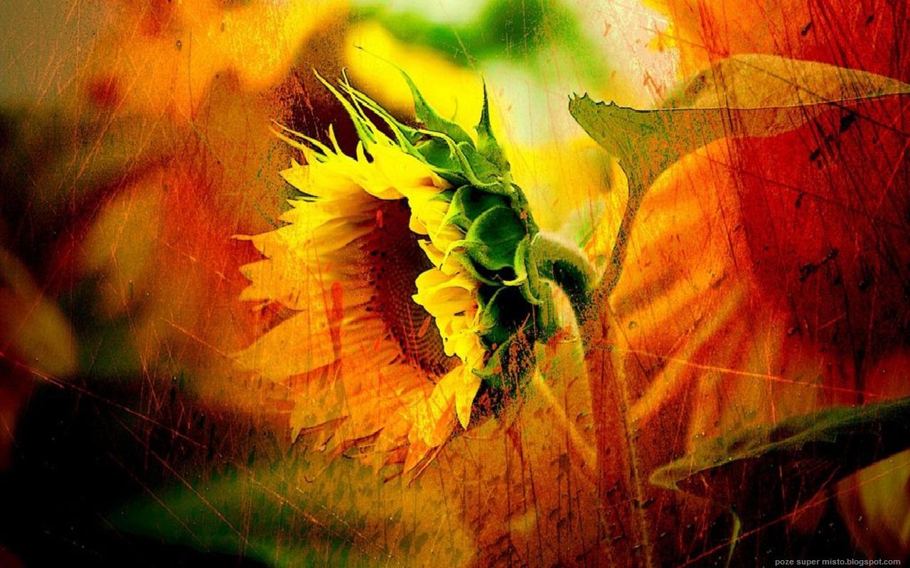http://3.bp.blogspot.com/-YbGQ8yL_JXk/TiLK0KSuTYI/AAAAAAAAD5A/8OxgeIdVW8E/s1600/floarea_soarelui.jpg