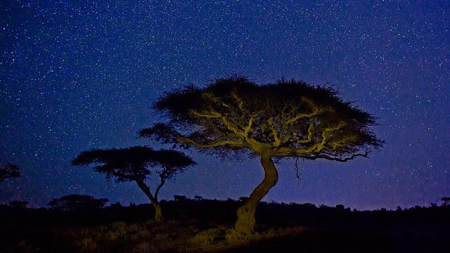 Acacia trees in Lewa Wildlife Conservancy, Kenya (© Marc Muench/Tandem Stills + Motion)
