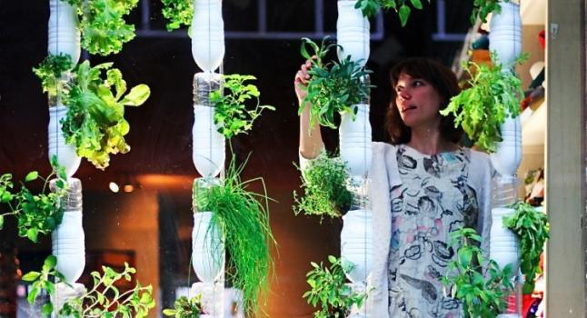 El cami de la vida comprar verduras y hortalizas si for Cultivo de verduras en casa