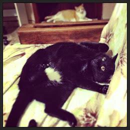Dracco (o gato de soleil)
