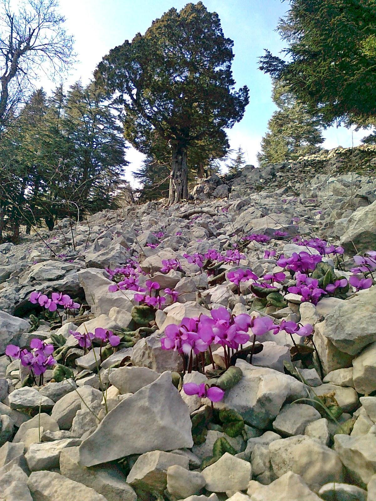 Antalyadan değişik bitkiler