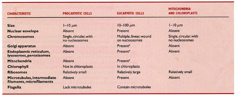 similarities between prokaryotes and eukaryotes