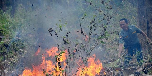 4 Orang Tewas Saat Padamkan Kebakaran Hutan di Ponogoro
