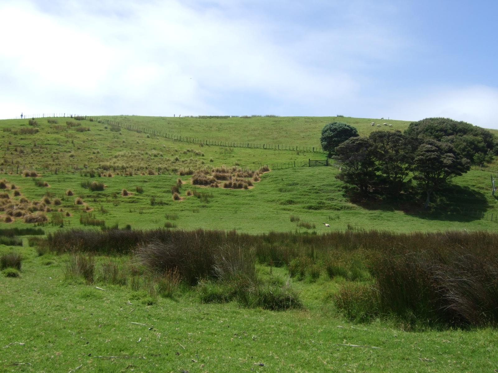 ウルプカプカ島,草原,樹木,放牧,NZ〈著作権フリー無料画像〉Free Stock Photos