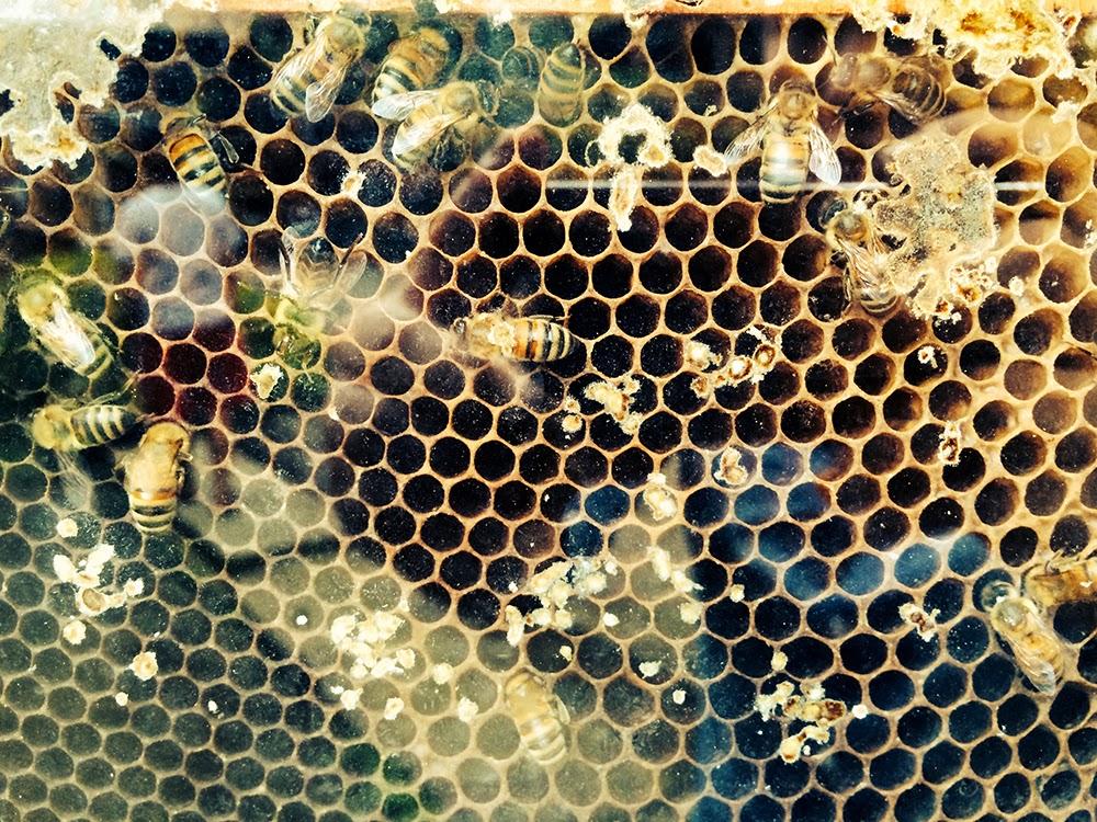 The Pink Doormat Ilog Maria Honey Bee Farm