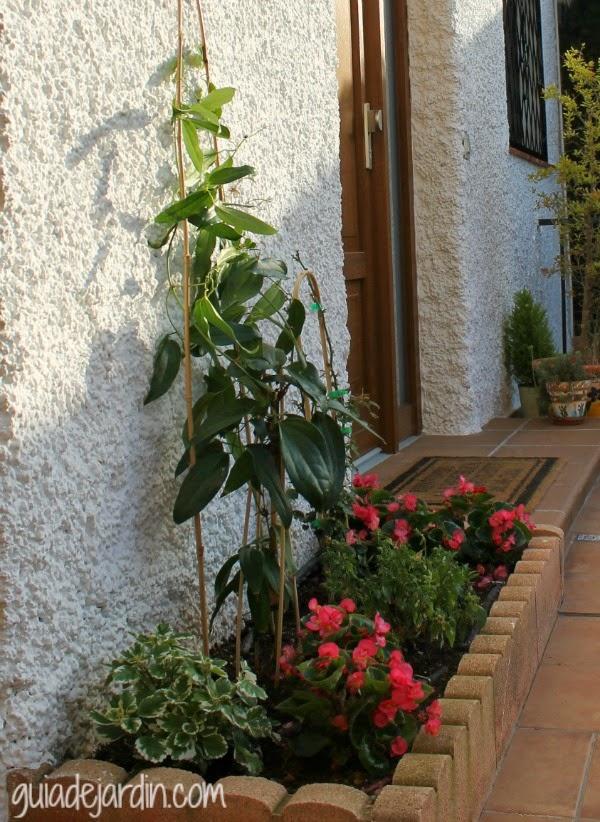 La entrada de casa antes y despu s guia de jardin - Plantas para arriates ...