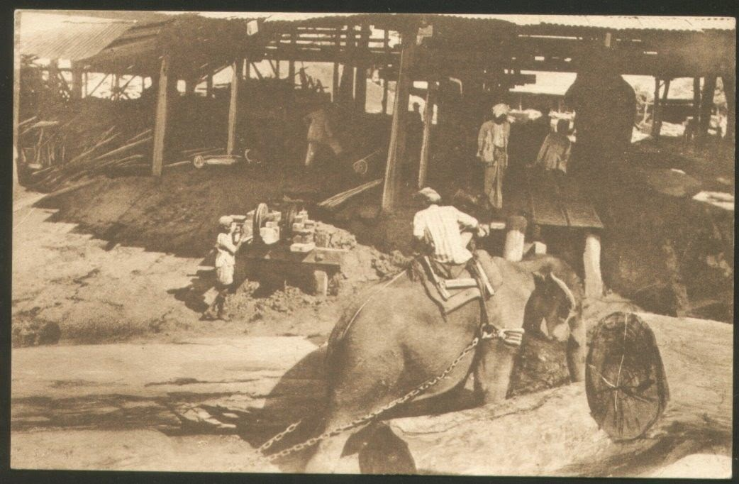 Vintage Post Cards of Burma (Myanmar) Elephants