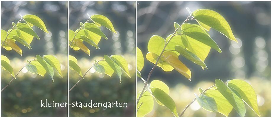 kleiner-staudengarten