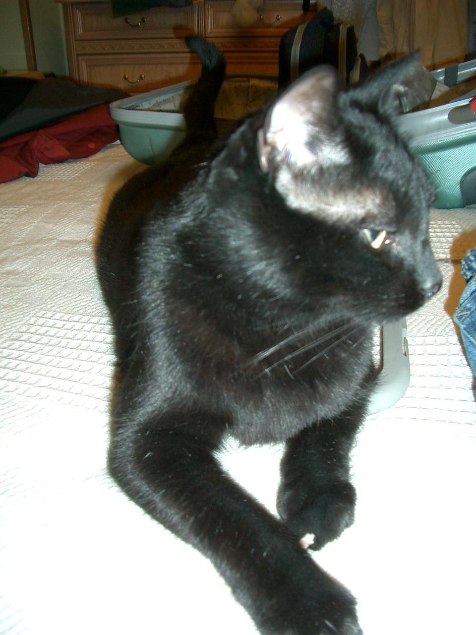 Mi gato diabetico alimento para gatos diab ticos - Alimento para gatos esterilizados ...