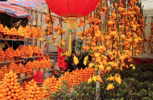 Beautiful Chinese New Year Plant Decoration