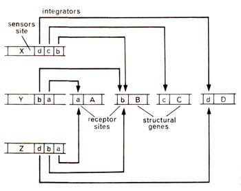 Honda Cb350 Wiring Diagram Starter moreover On A 1986 Honda Cmx450 Wiring Diagram additionally Wiring Diagram 1985 Alfa Romeo Spider as well Transmission Schematic Honda Trx300ex Fourtrax 300ex 1994 Usa also 09 V Star 1300 Wiring Schematics. on honda goldwing wiring diagram