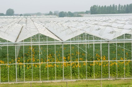 Gas Greenhouse Heaters