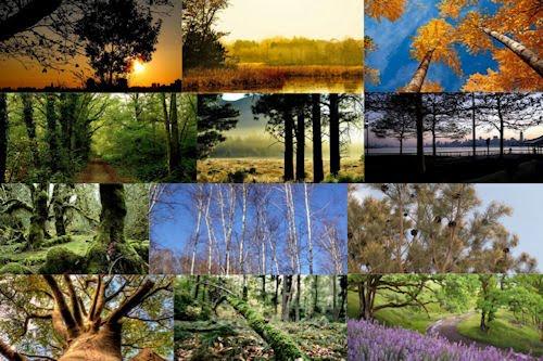 Fotos de árboles en todas las estaciones del año I