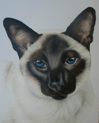 Pet Portrait Siamese Cat